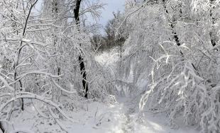 Rozprávkovú zimnú krajinu vyčaroval sneh ku koncu roka 2017 v Mestských lesoch v Bratislave